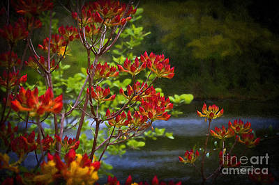 Photograph - Colors Of Summer by Cris Hayes