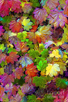 Photograph - Colors Of The Season by Sonya Lang