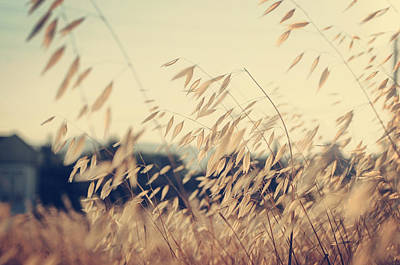 Photograph - Colors Of The Wind by Taylan Apukovska