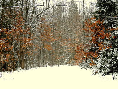 Photograph - Colors Of The Winter by Amalia Jonas