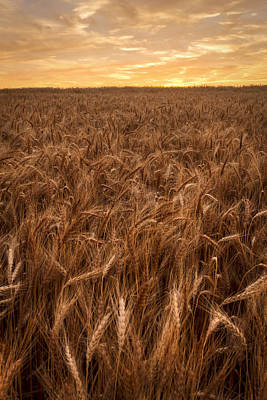 Art Print featuring the photograph Colors Of Wheat by Scott Bean