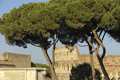 Photograph - Colosseum Through The Trees by Marianne Campolongo