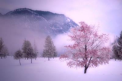 Colour Admist The Snow And Cloud Art Print
