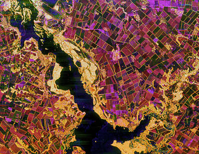 Dnieper Wall Art - Photograph - Coloured Radar Image Of Agriculture In The Ukraine by Nasa/science Photo Library