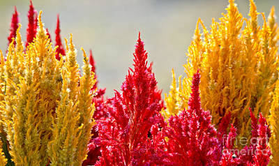 Photograph - Colourful Plants by Cheryl Baxter