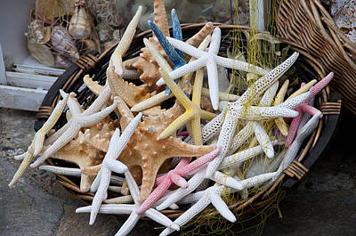 Photograph - Colourful Starfish by Brenda Kean