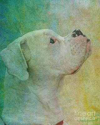 Boxer Dog Digital Art - Colours by Judy Wood