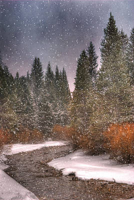 Wilderness Photograph - Colours Of Winter by Juli Scalzi
