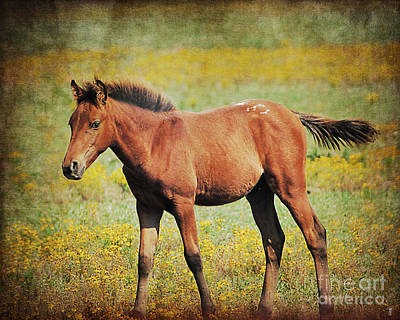 Colt In The Meadow II Art Print