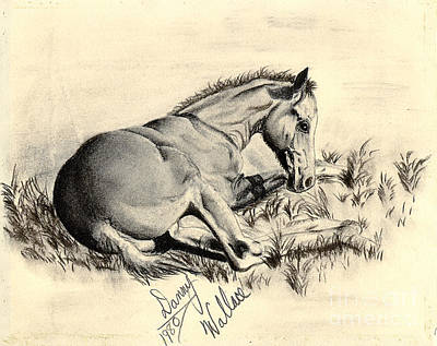 Drawing - Colt Laying In Grass by D Wallace