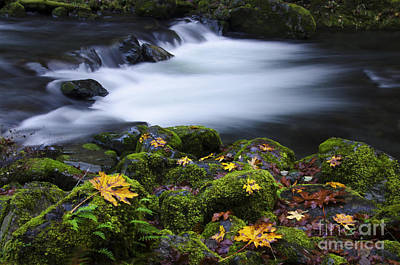 Columbia River Gorge Tanner Creek 1 Art Print by Bob Christopher