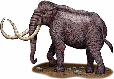 Photograph - Columbian Mammoth by Roger Hall