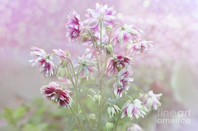 Columbine Beauty Art Print by Elaine Manley