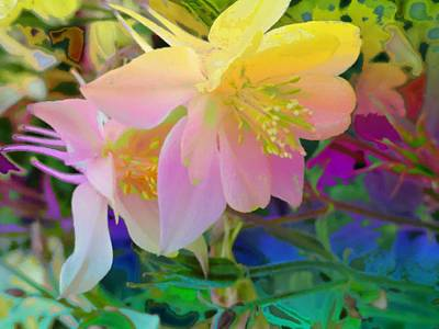 Photograph - Columbine by Mike Breau