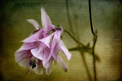 Photograph - Columbine by Zoran Buletic