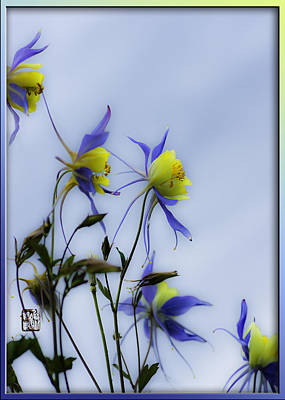 Art Print featuring the photograph Columbines by Peter v Quenter