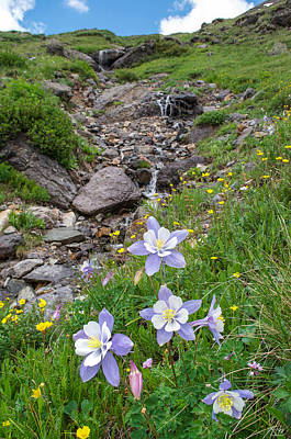 Photograph - Columbines With Waterfall by Aaron Spong