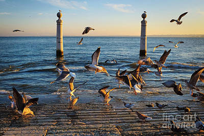 Pigeon Photograph - Columns Dock In Lisbon by Carlos Caetano