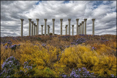 Photograph - Columns In Fall Colors by Erika Fawcett