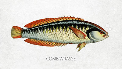 Fish Species Digital Art - Comb Wrasse by Aged Pixel