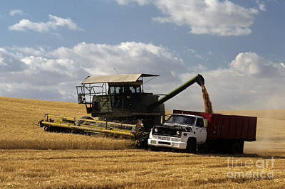 Roaring Red - Combine and truck in wheat field by Jim Corwin