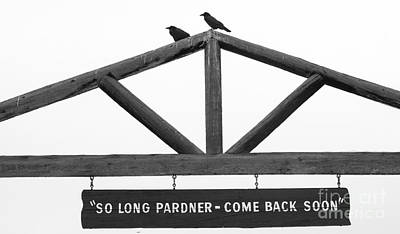 Photograph - Come Back Soon by Deby Dixon