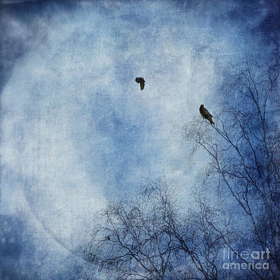 Blue Photograph - Come Fly With Me by Priska Wettstein