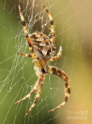 Photograph - Come Into My Web by David Warrington