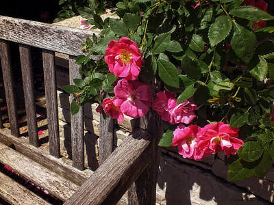 Photograph - Come Sit And Smell The Roses by Lucinda Walter