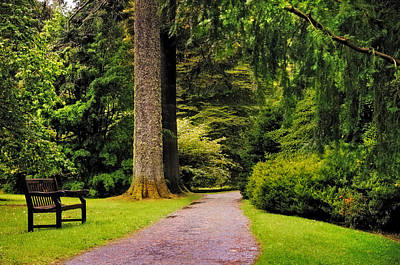 D300 Photograph - Come Sit With Me. Benmore Botanical Garden. Scotland by Jenny Rainbow