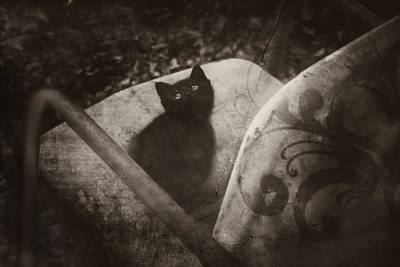 Photograph - Come Sit With Me by Kim Henderson