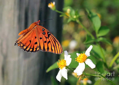 Butterfly In Flight Photograph - Come To Me by Carol Groenen
