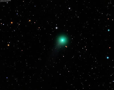 Gaseous Coma Photograph - Comet C2013 X1 by Damian Peach