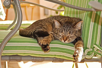 Photograph - Comfy Kitty by Aimee L Maher ALM GALLERY