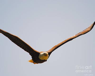 Eagle Photograph - Coming At You by Jai Johnson