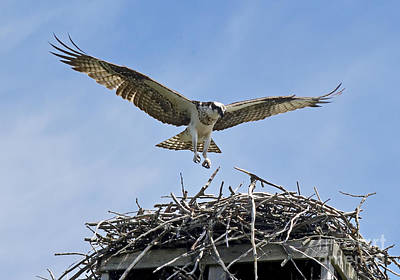 Photograph - Coming In - Osprey by Andrea Kollo