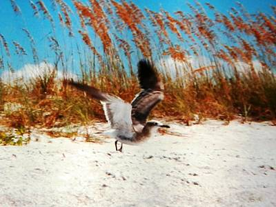 Windy Seagull Landing Art Print