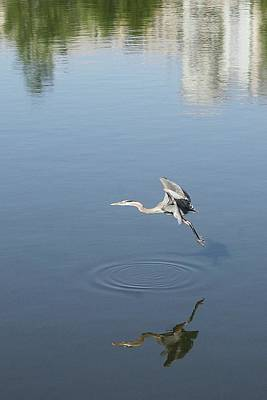 Photograph - Coming In For A Landing by Ellen Barron O'Reilly