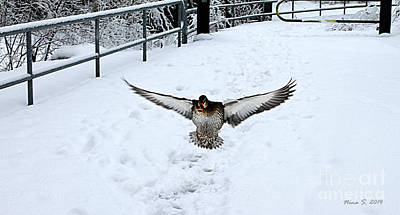 Photograph - Coming In For A Landing by Nina Silver