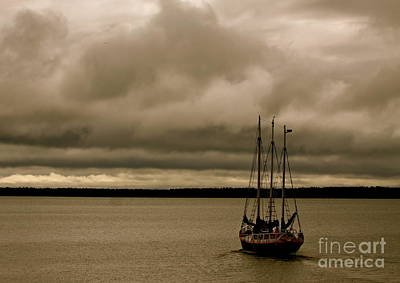 Photograph - Coming In From The Storm by Kate Purdy