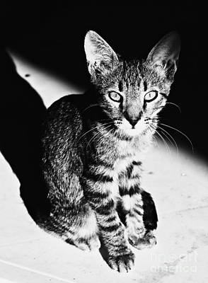 Pets Photograph - Coming Into The Light by Clare Bevan