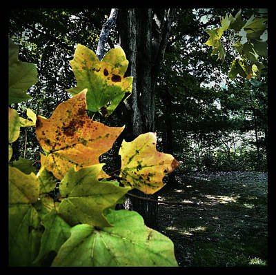 Photograph - Coming Of Fall by Al Harden