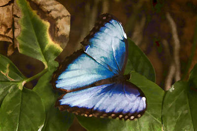 Digital Art - Common Blue Morpho  by Photographic Art by Russel Ray Photos