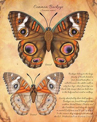 Painting - Common Buckeye Butterfly  by Tammy Yee