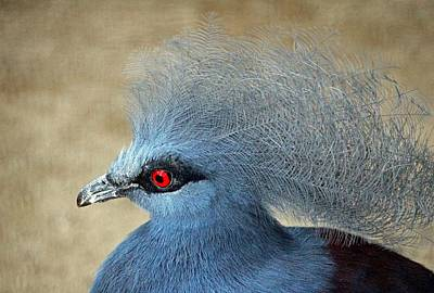Common Crowned Pigeon Art Print by Cynthia Guinn