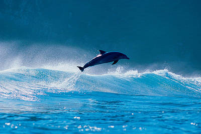 Common Dolphin Breaching In The Sea Art Print by Panoramic Images