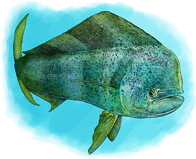 Photograph - Common Dolphinfish by Roger Hall