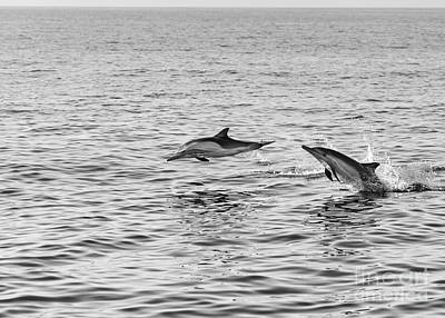 Common Dolphins Leaping. Art Print by Jamie Pham
