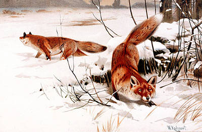 Snow Scenes Digital Art - Common Fox In The Snow by Friedrich Wilhelm Kuhnert