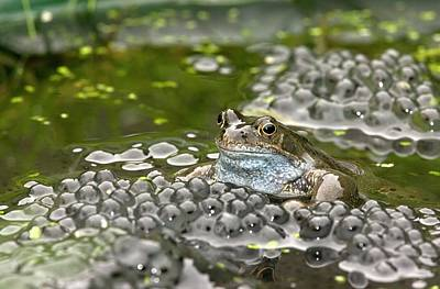 Common Frog And Frogspawn Art Print by Bob Gibbons
